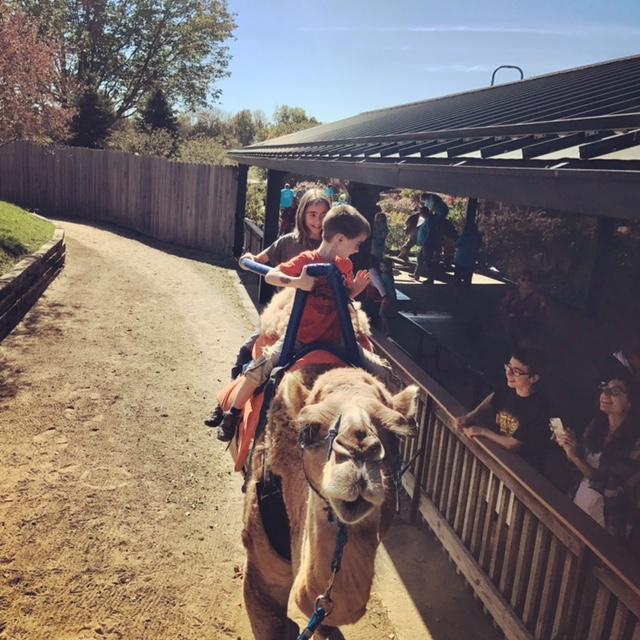 camelride